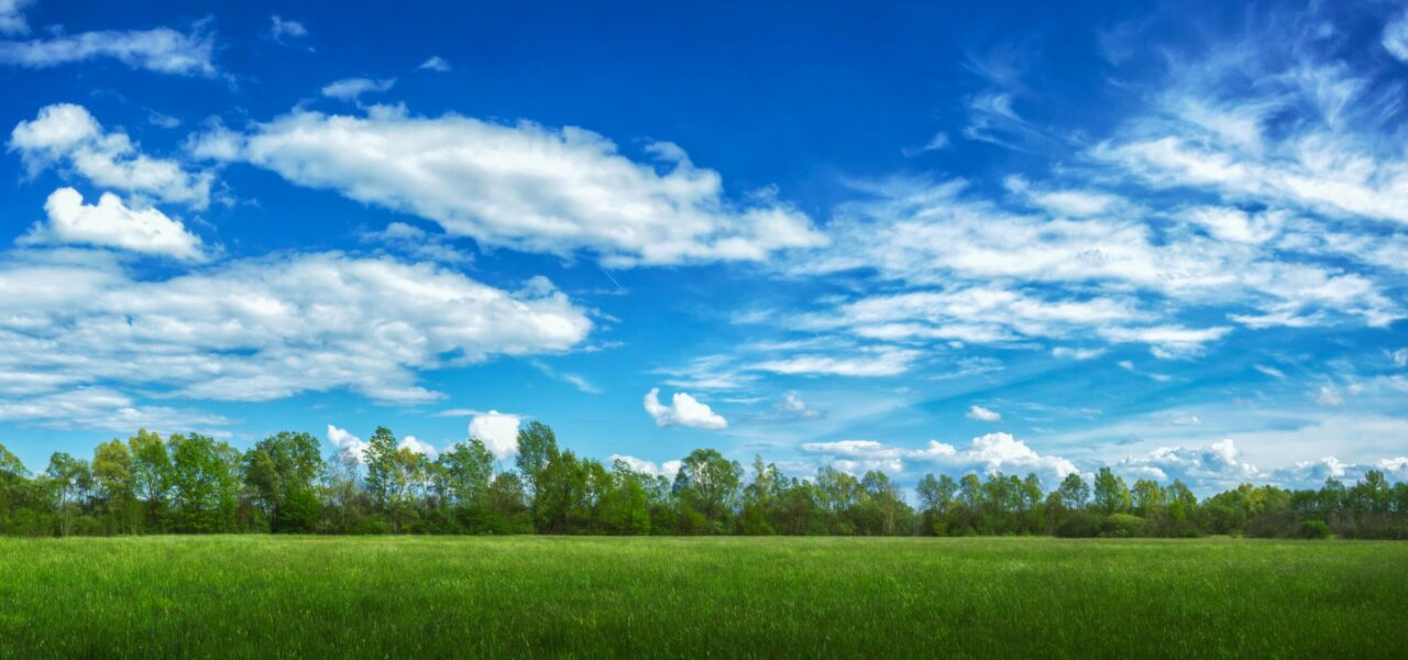 A panoramic view of a field covered in grass and trees under sunlight and a cloudy sky
